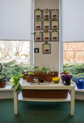 kącik roślinny- przestrzeń dozajęć ogrodniczych